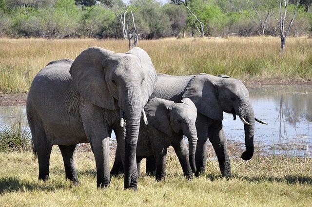 Hvorfor er safarier så fascinerende